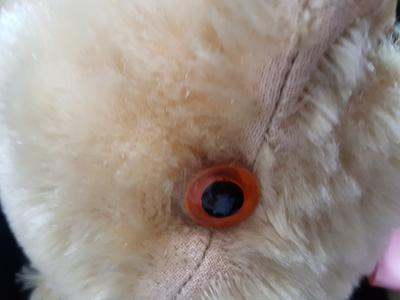 orange teddy bear eye