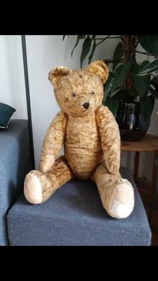 Whole bear sitting