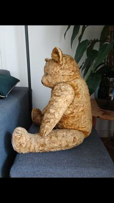 Bear sitting from the side
