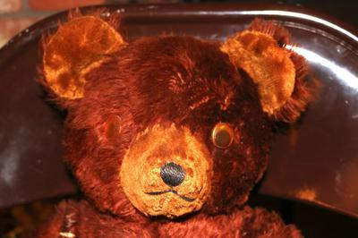 Close up of bear with googley eyes