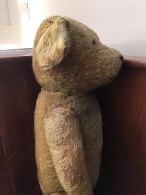 side view of big teddy