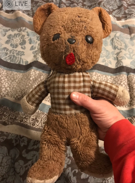 Brown Bear with Shirt