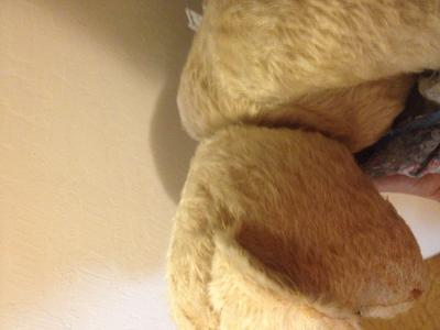 teddy bear humpback