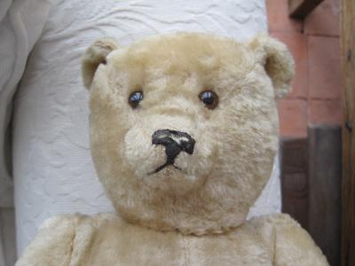 french teddy bear face