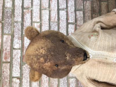long nosed teddy bear face
