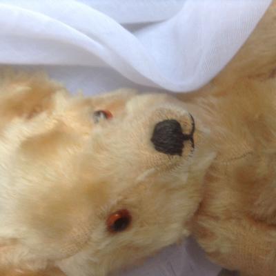 Edward teddy bear face
