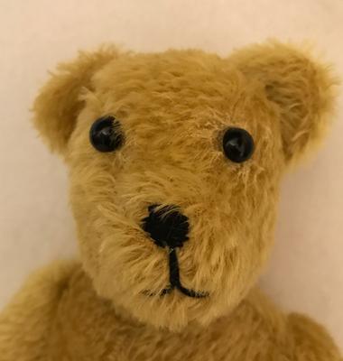 golden teddy bear face