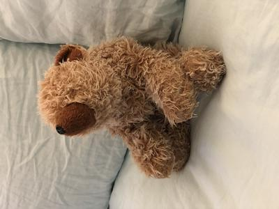 Brown teddy Bear with dark brown Nose