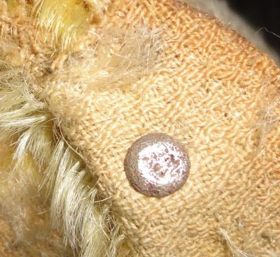 button in teddy bear ear