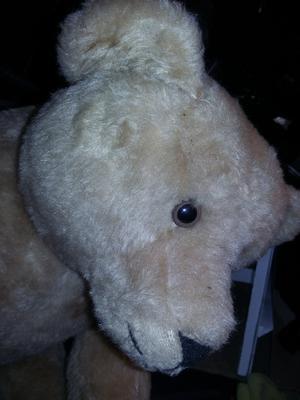 Old teddy bear face