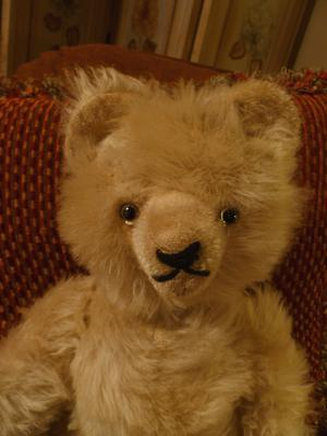 white haired teddy bear face