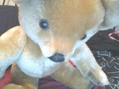 close up of teddys face