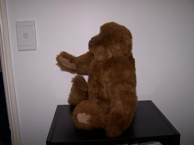 JB bear profile