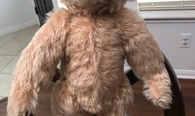 teddy bear tummy