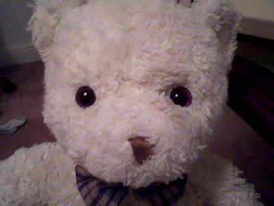 white teddy bear face