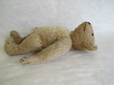 Old bear lying down