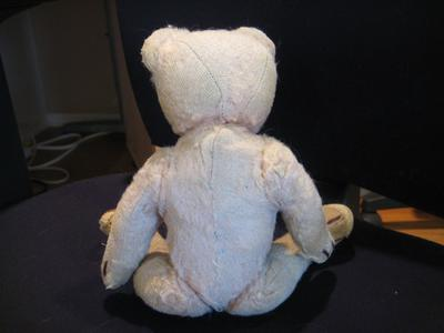 back view of bear