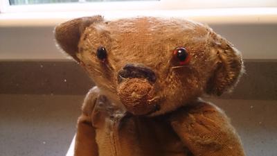 scottish teddy bear face