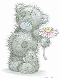 tatty bear drawing