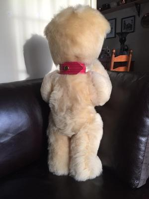 Back view of cream bear