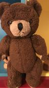 35 year old brown bear