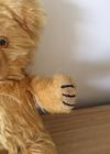 Benji Bear  paw