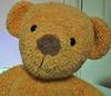 Teddy- face view