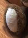 Close up of pad