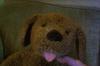 Gund Dog face