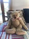 Growling Teddy Bear