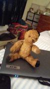 teddy bear with black ears
