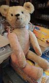 harlequin bear?