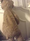 Saggy Old Bear