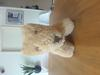 25cm old teddy bear / dog front view