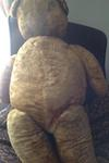 Big old bear back view