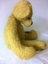 Unusual golden bear