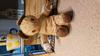 Well loved bear, a gift in 1967