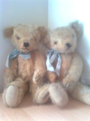 Two old bears