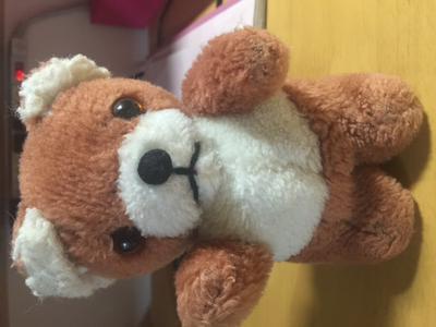 Kaolo the bear