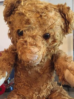 scruffy teddy bear face