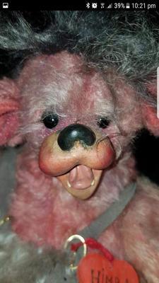 Bear with an unusual face