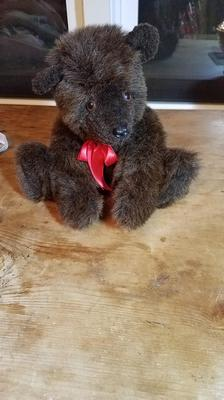Small brown bear seated