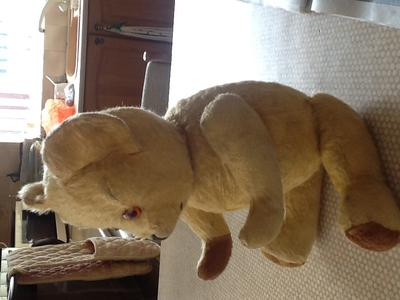 side view of old British bear