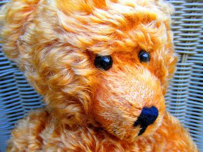 teddy bear face close up