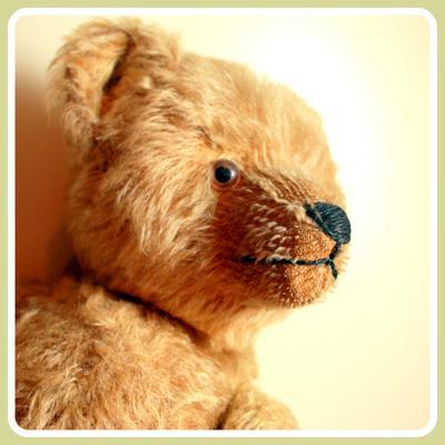 critical looking Teddy