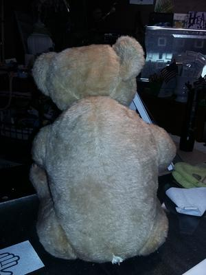 Back of old brown bear