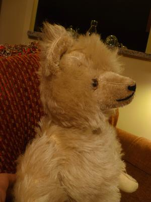 side view of white haired teddy bear