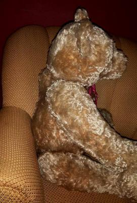 Old Large Teddy Bear side view