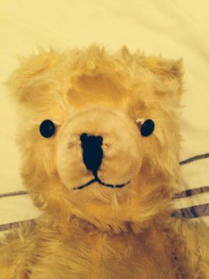 golden bear face