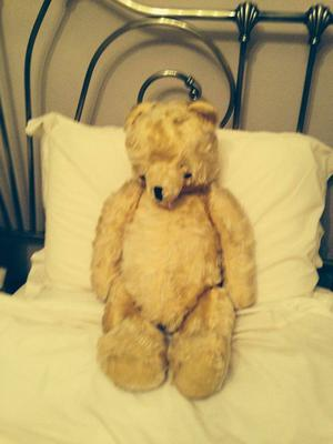 Sitting golden teddy bear
